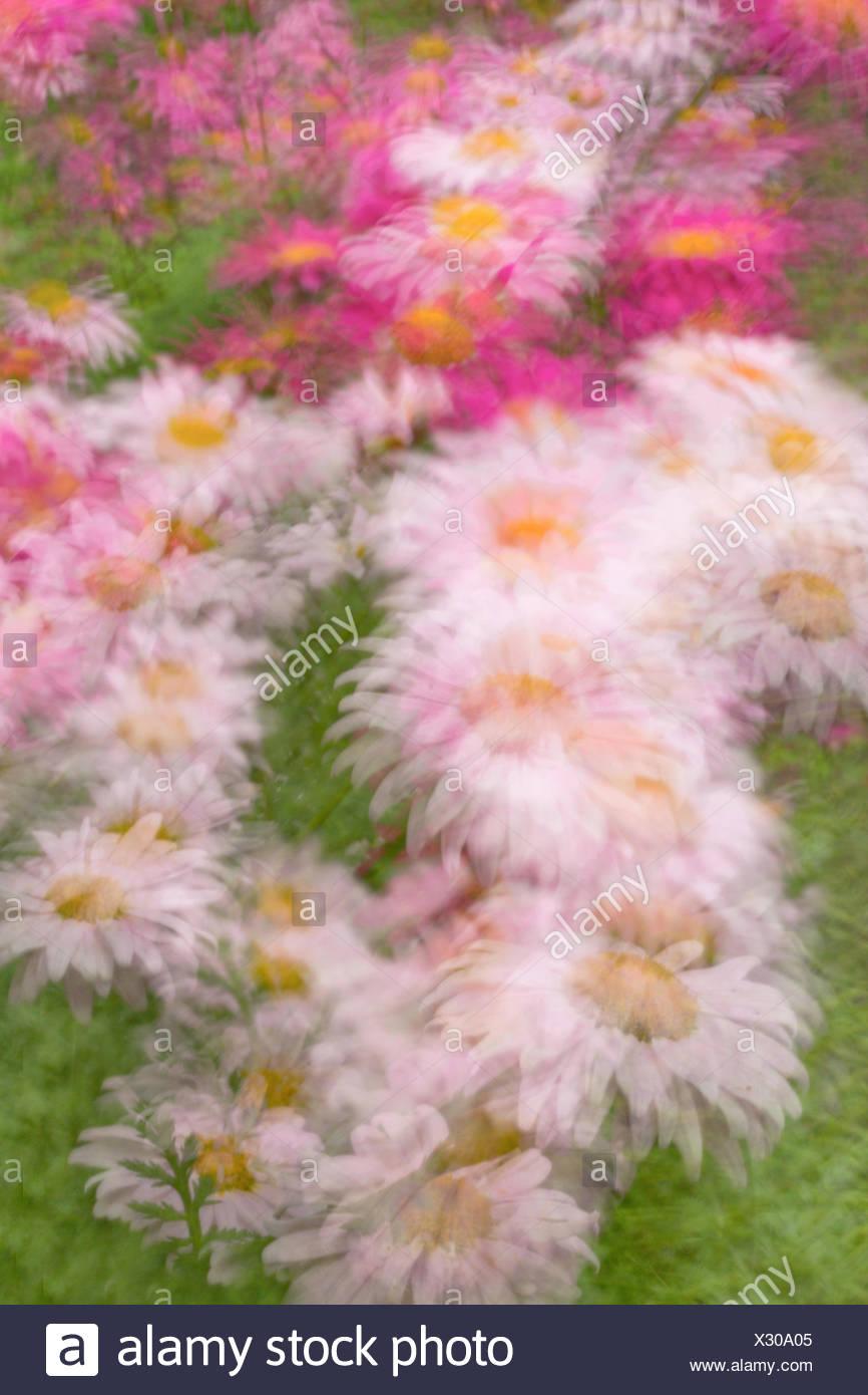 Blur creative flower flowers bloom blooms impressionistic blur creative flower flowers bloom blooms impressionistic oregon or usa america united states izmirmasajfo