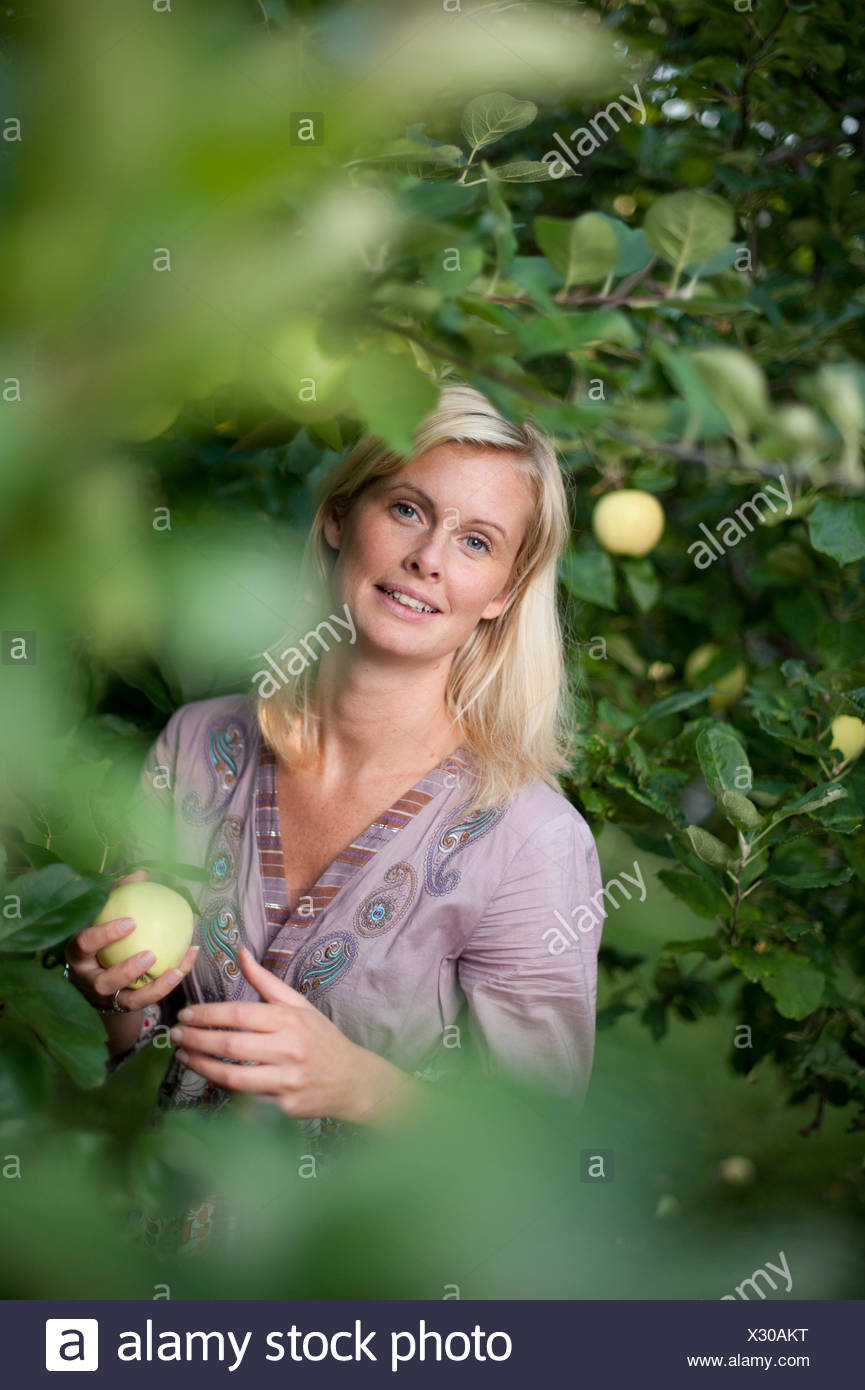 Portrait of mid adult woman picking apples from tree - Stock Image