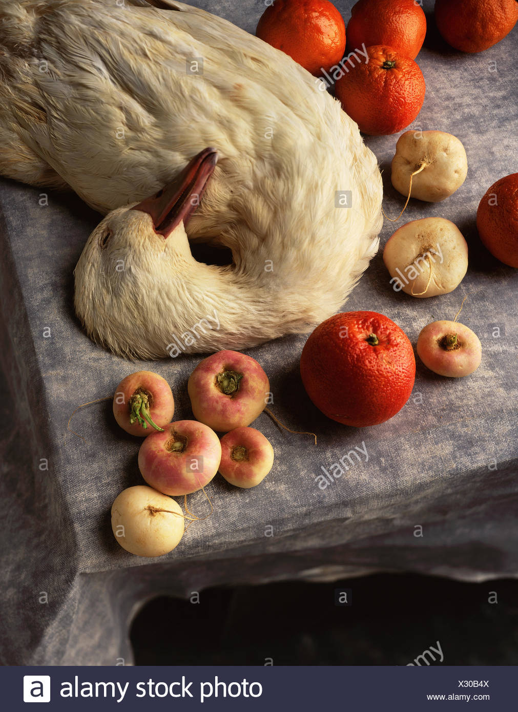 Still life of aylesbury duck, blood oranges and turnips - Stock Image