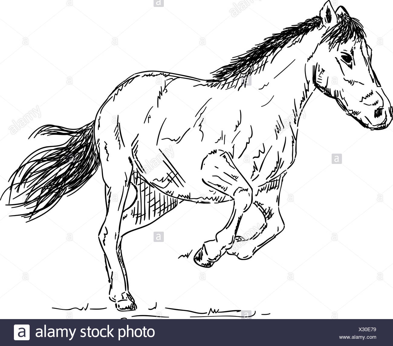 Isolated Colour Animal Illustration Paint Draw Isolated Colour Horse Stock Photo Alamy