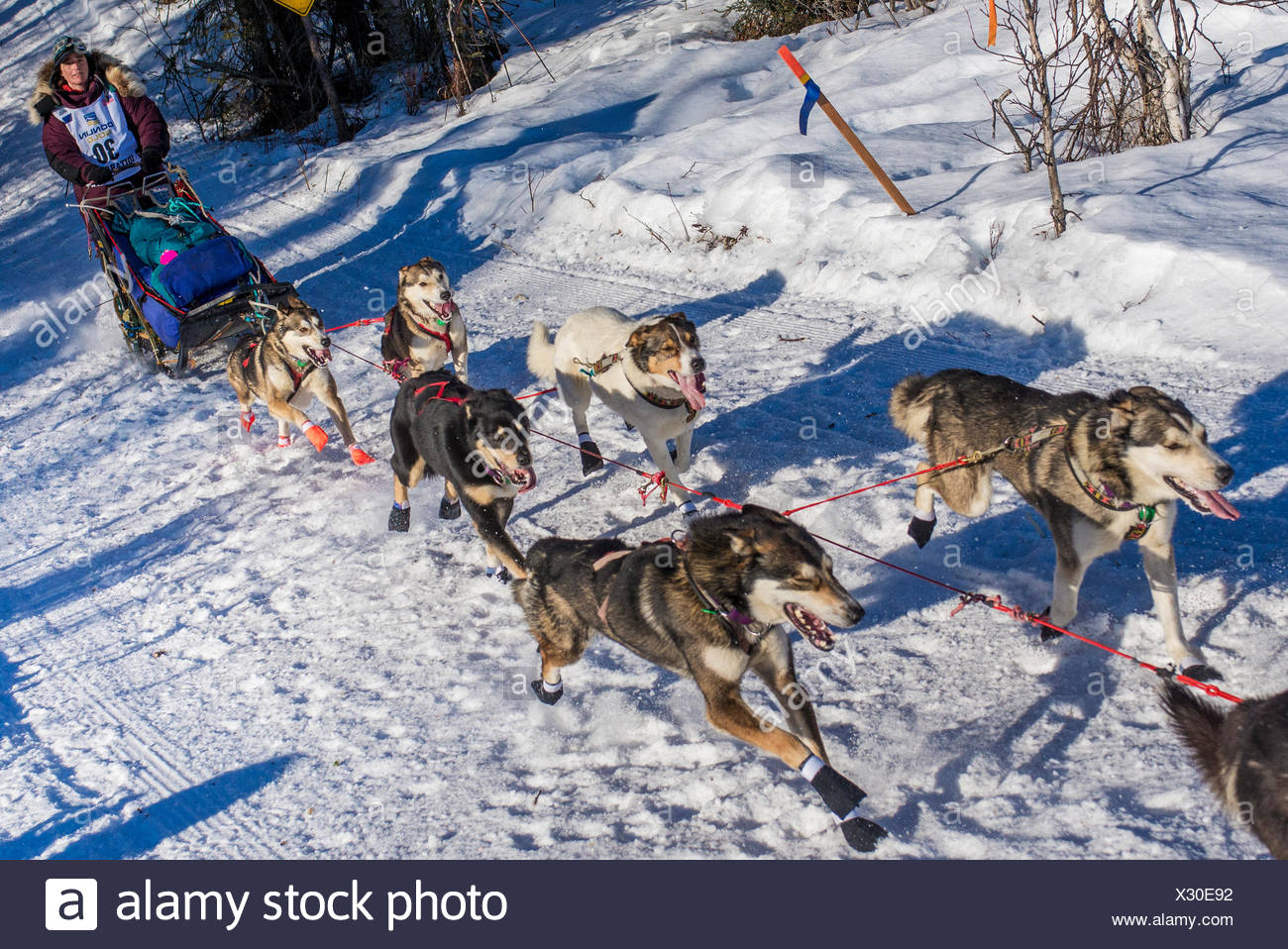 Michelle Phillips and team run down the trail on Long Lake shortly after leaving the re-start in Willow, Alaska during the 2016 Iditarod - Stock Image