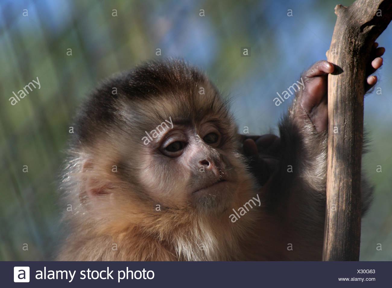 shine shines bright lucent light serene luminous monkey skin branch fence cute - Stock Image