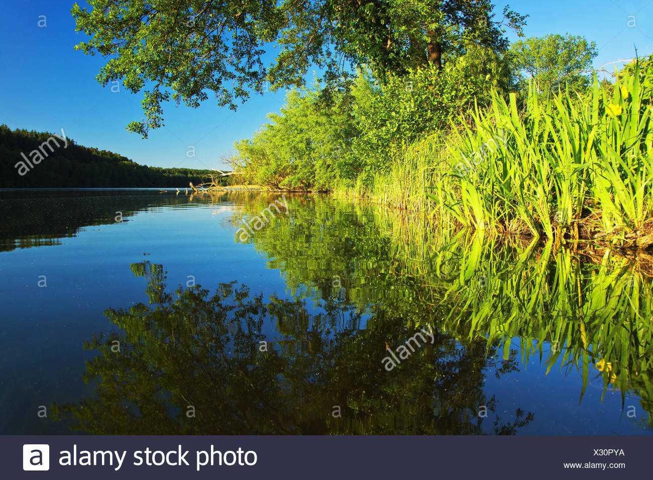 Salem See, Germany, Schleswig-Holstein, - Stock Image