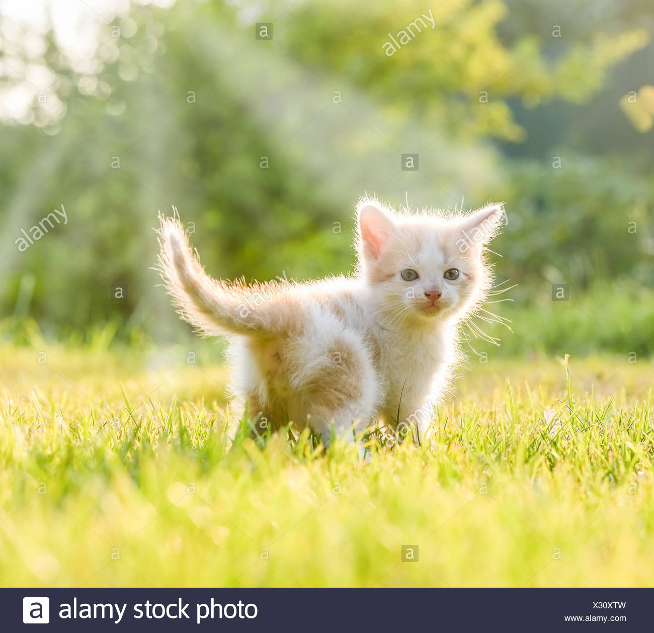 little kittens - Stock Image