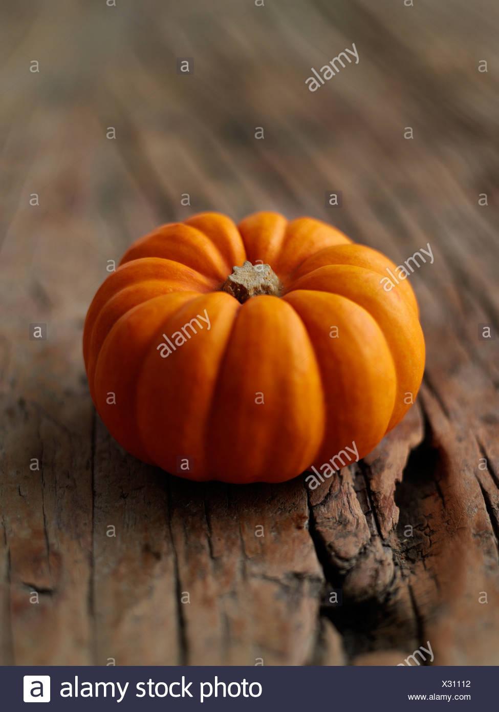 Munchkin Pumpkin - Stock Image