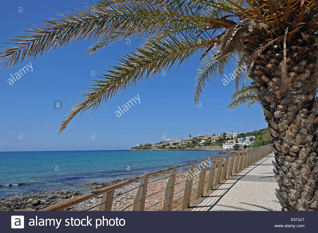 Palm tree, promenade, Malia, Crete, Greece, Europe - Stock Image