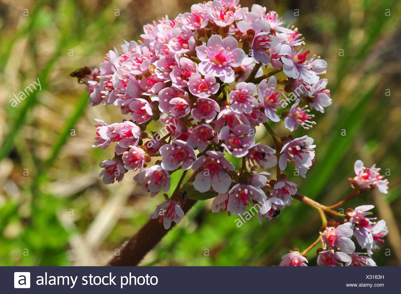Botany, a root sort, - Stock Image