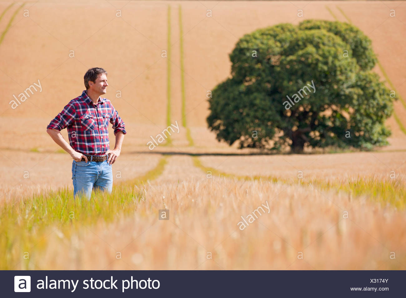 Farmer standing with hands on hips in sunny rural barley crop field - Stock Image