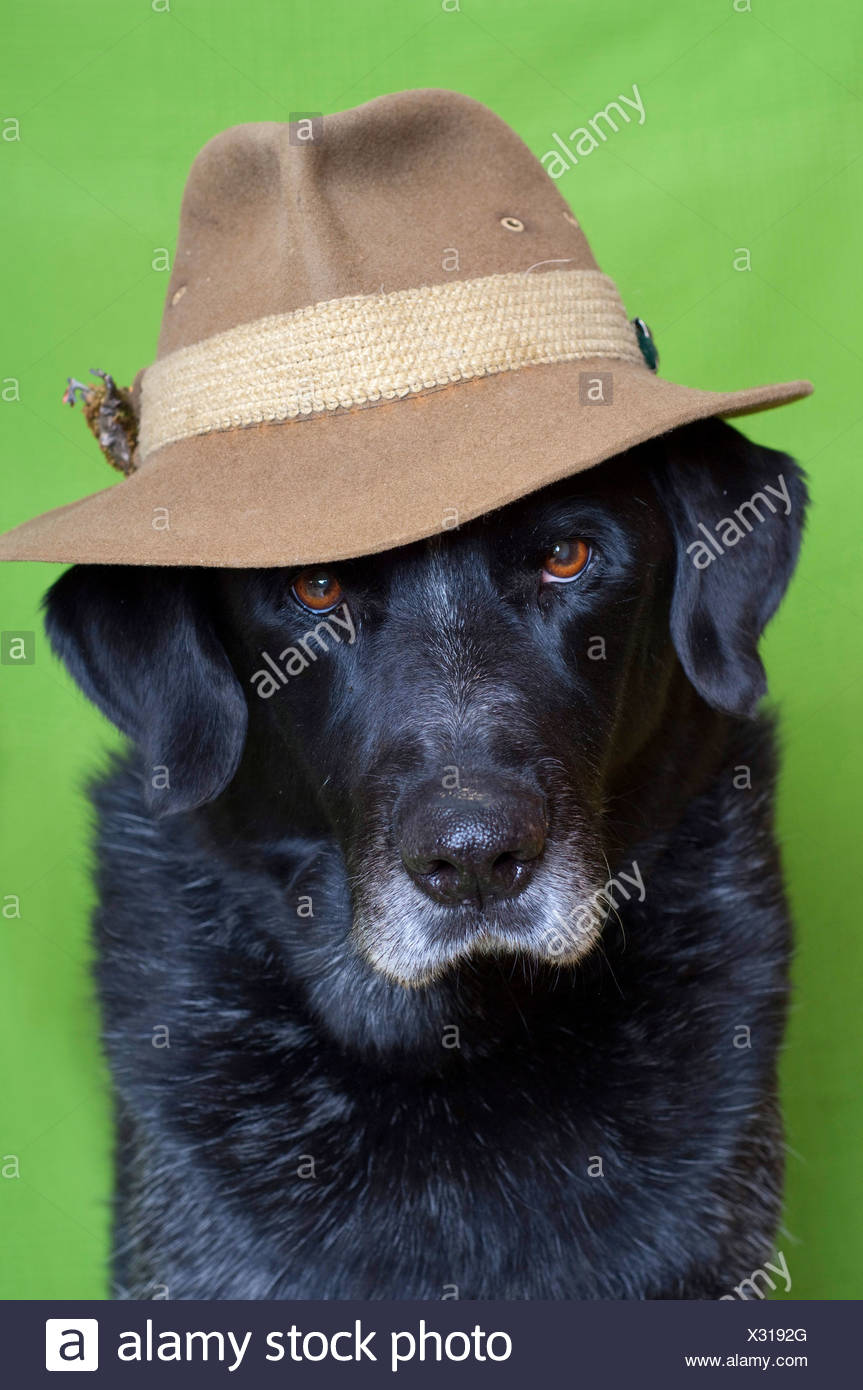 Hat Breed Of Dog Is Known As A Sausage Dog