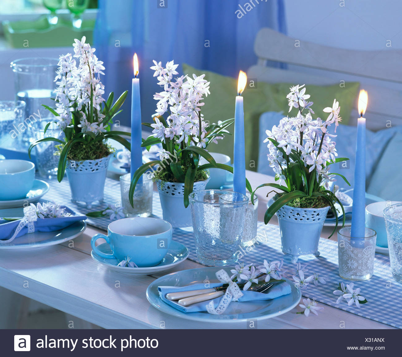 Festive table decorated with glory-of-the-snow - Stock Image