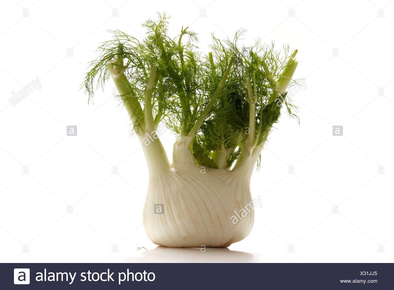 Fresh fennel bulb with green Stock Photo