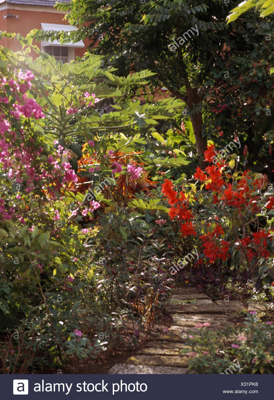 Caribbean Garden Stock Photos & Caribbean Garden Stock Images - Alamy