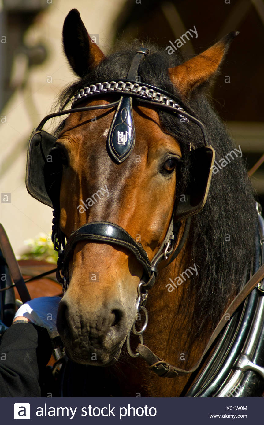 Horse Blinkers New and Used