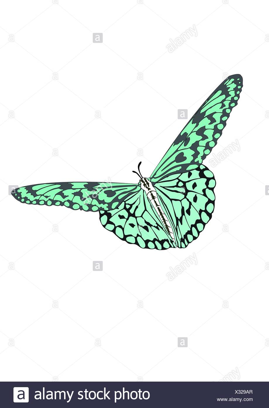 The Butterfly with open wings in a top view as a flying migratory insect butterflies - Stock Image