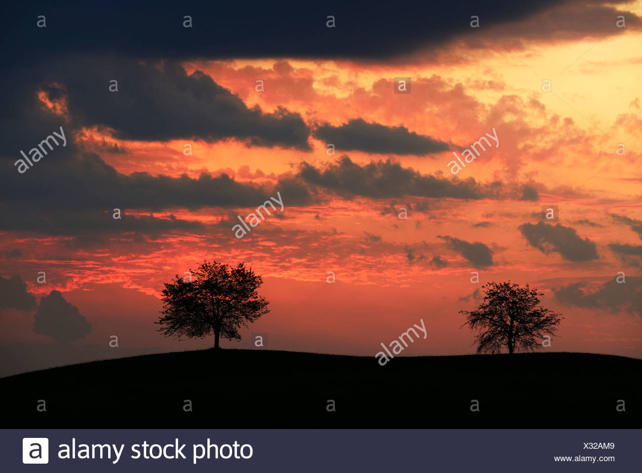 Trees silhouetted against a sky full of storm clouds - Stock Image