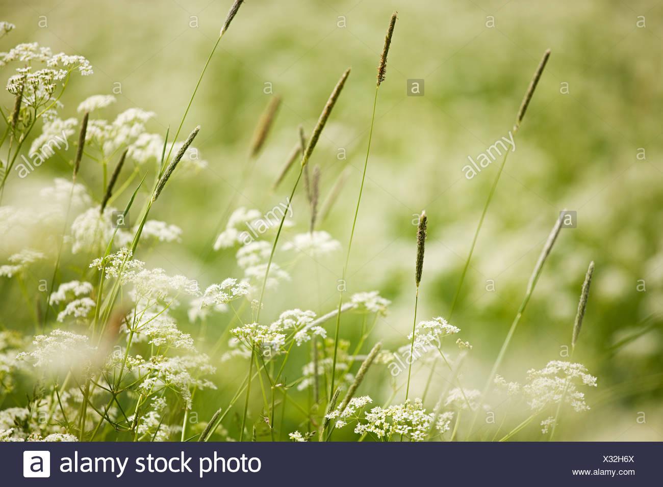 Close up of wild plants - Stock Image