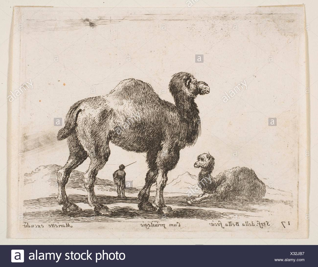 Plate 17: camels, from 'Various animals' (Diversi animali). Series/Portfolio: 'Various animals' (Diversi animali); Artist: Stefano della Bella - Stock Image