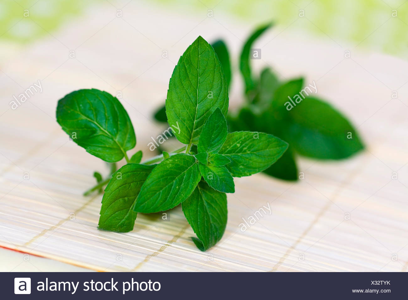 peppermint - Stock Image