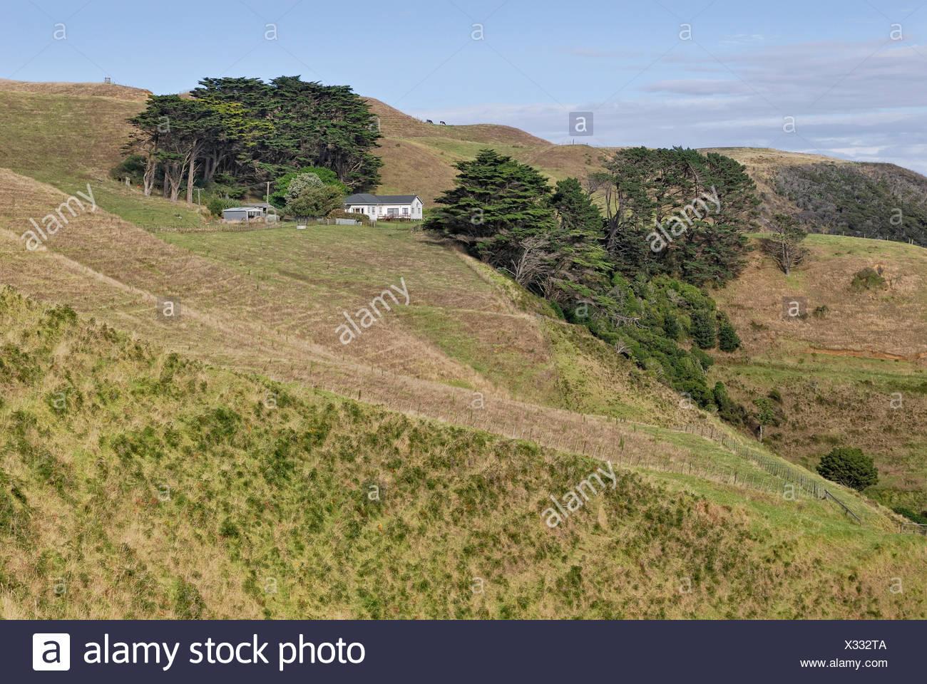 Pastures with farm house on the Lees Gully Road, Manukau Peninsula, North Island, New Zealand - Stock Image