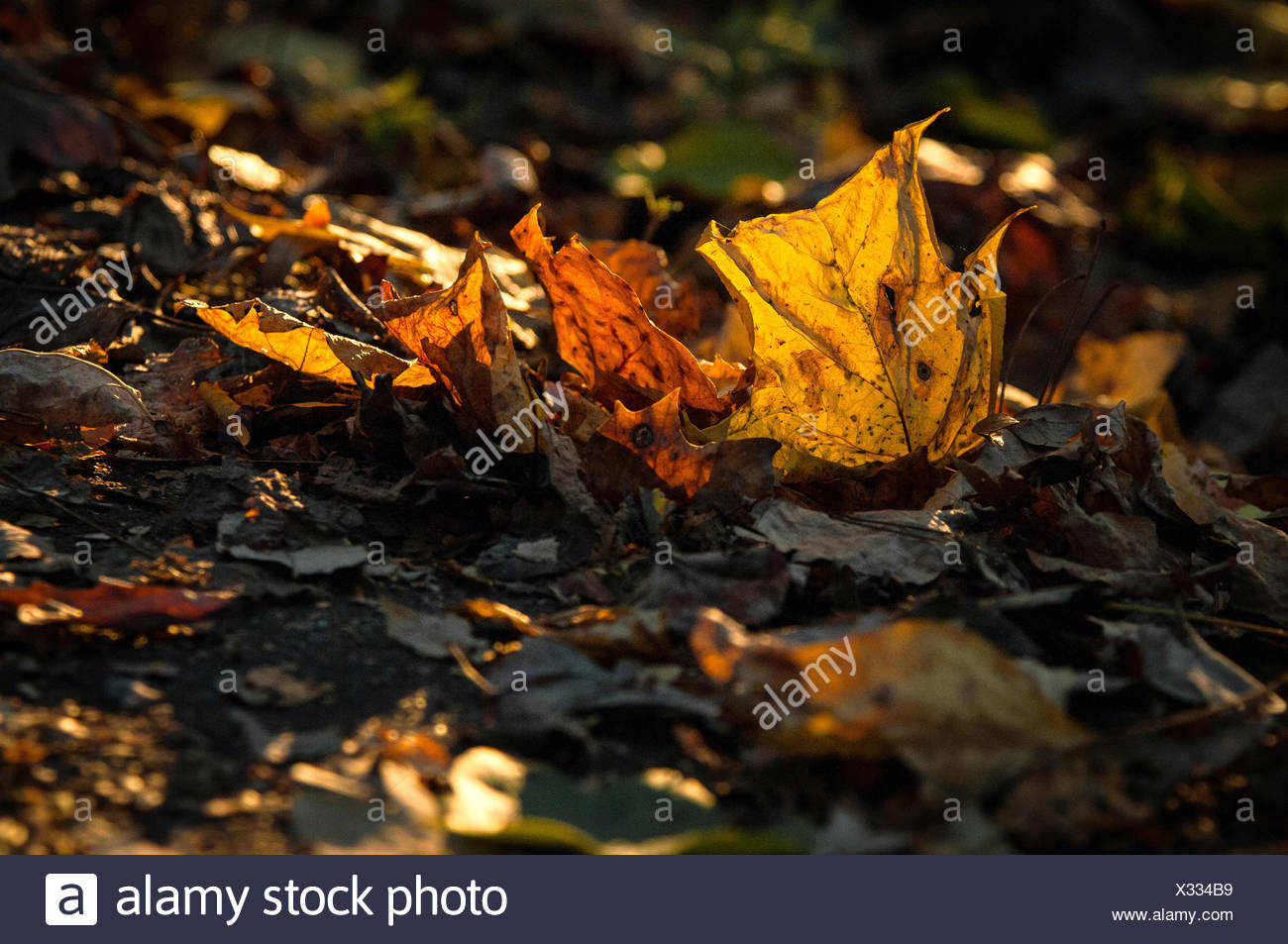 Sunlight shines on leaves on the ground. - Stock Image