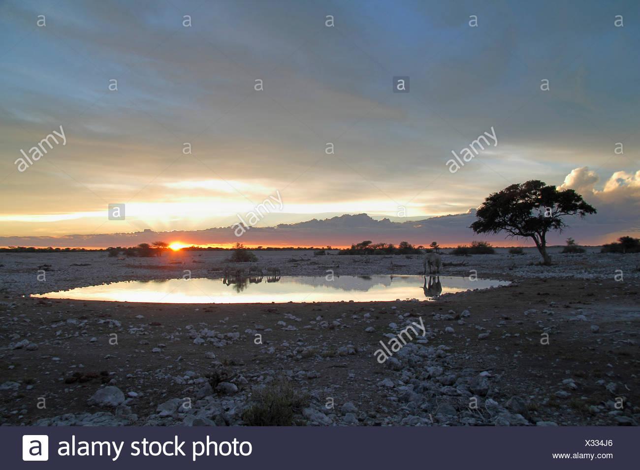 evening light at a waterhole, Namibia, Etosha National Park, Okaukejo Lodge - Stock Image