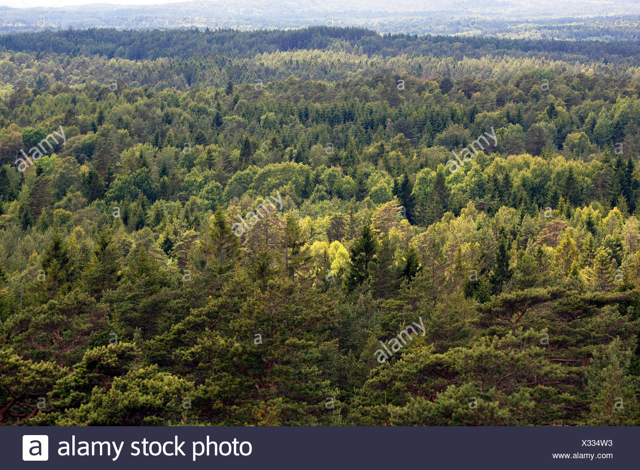 High angle view of forest - Stock Image