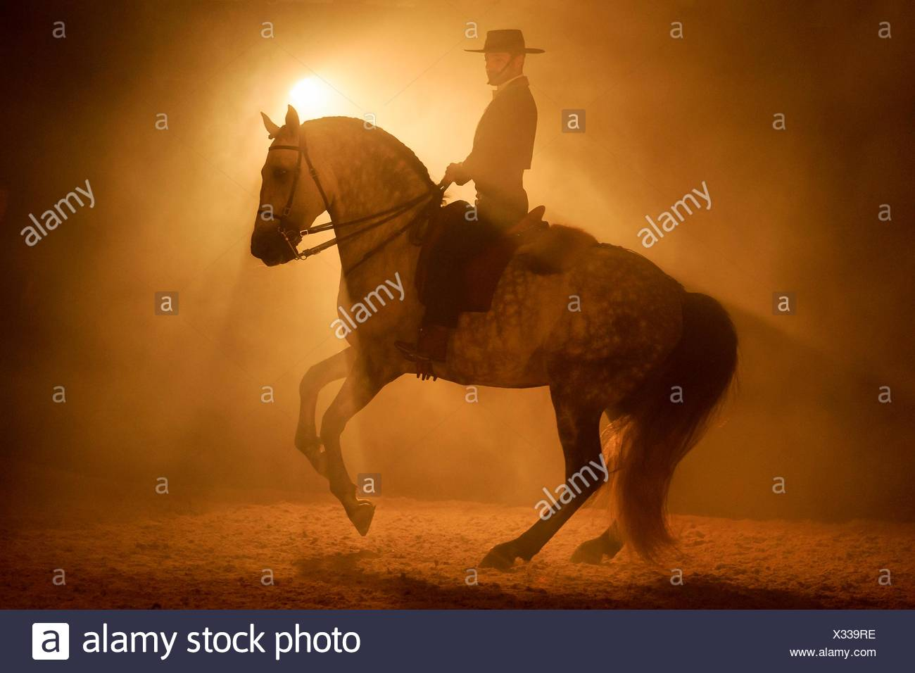 Lusitano. Rider in traditional dress performing a pirouette with a gray stallion at night. Portugal - Stock Image