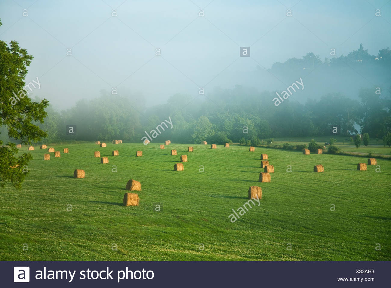 Large round grass hay bales in an Ozark Mountains hay meadow, ready to be moved to a storage area / Arkansas, USA. Stock Photo