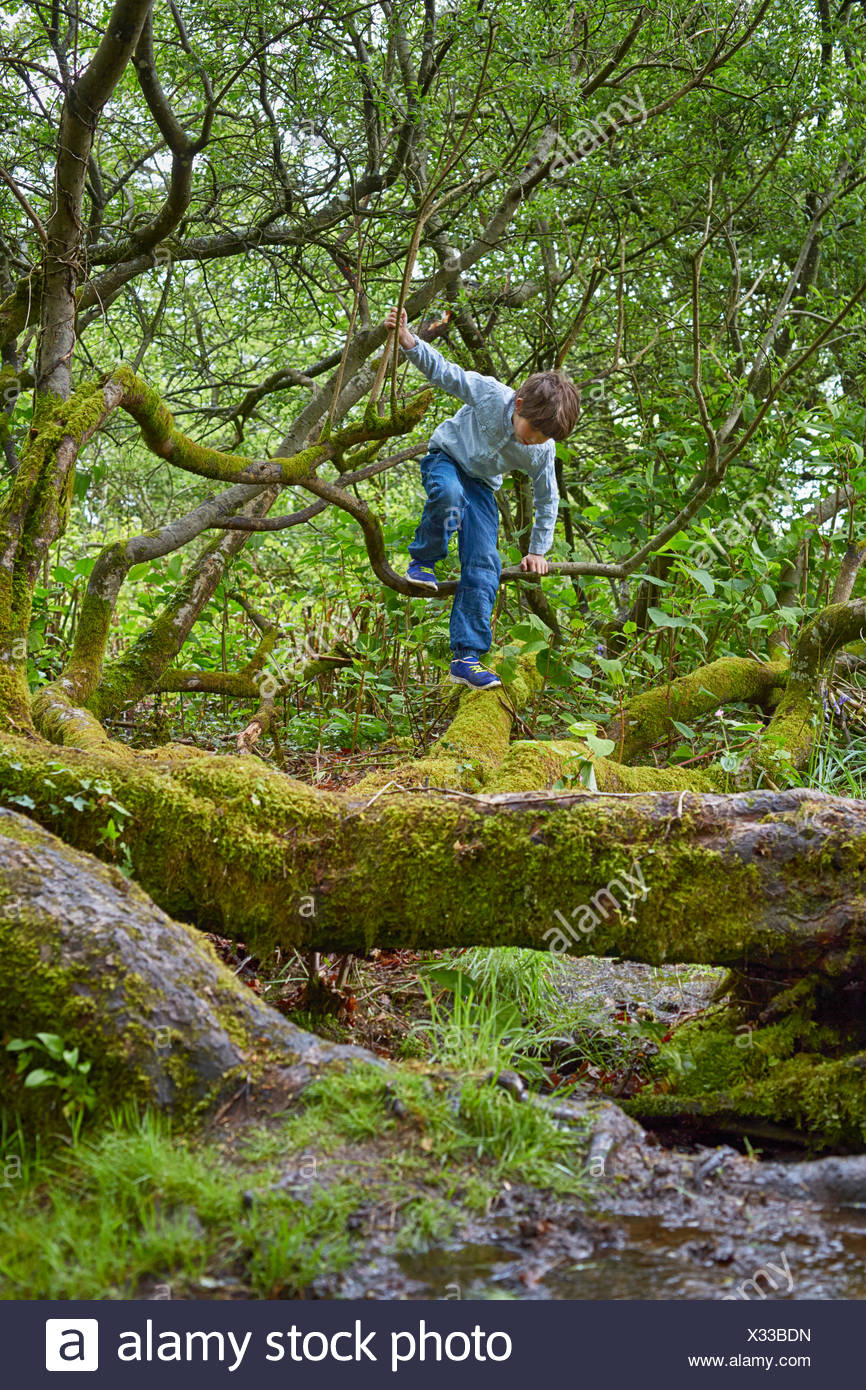 Boy climbing on trees in woods - Stock Image