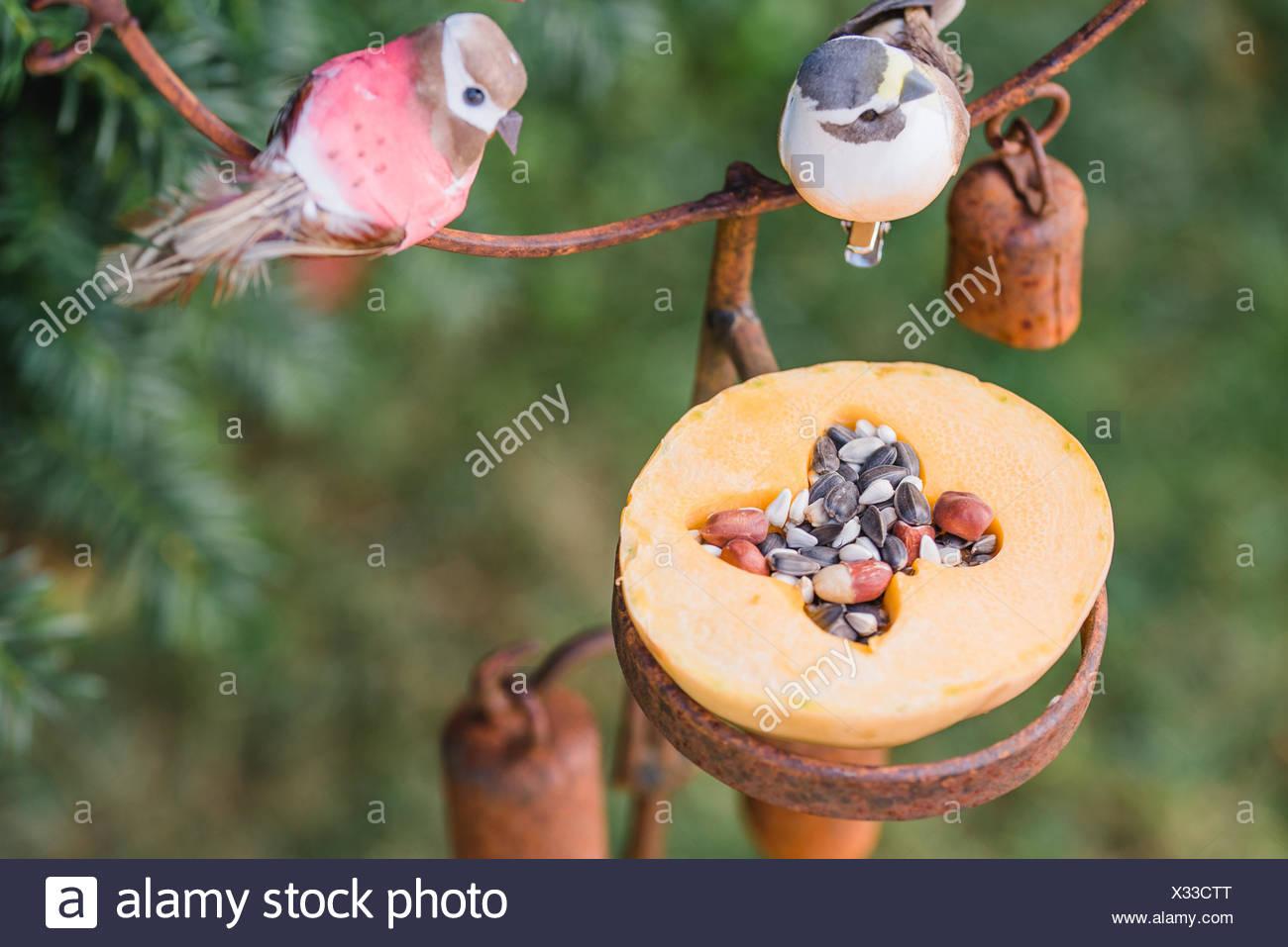 DIY, bird feeder, pumpkin, - Stock Image