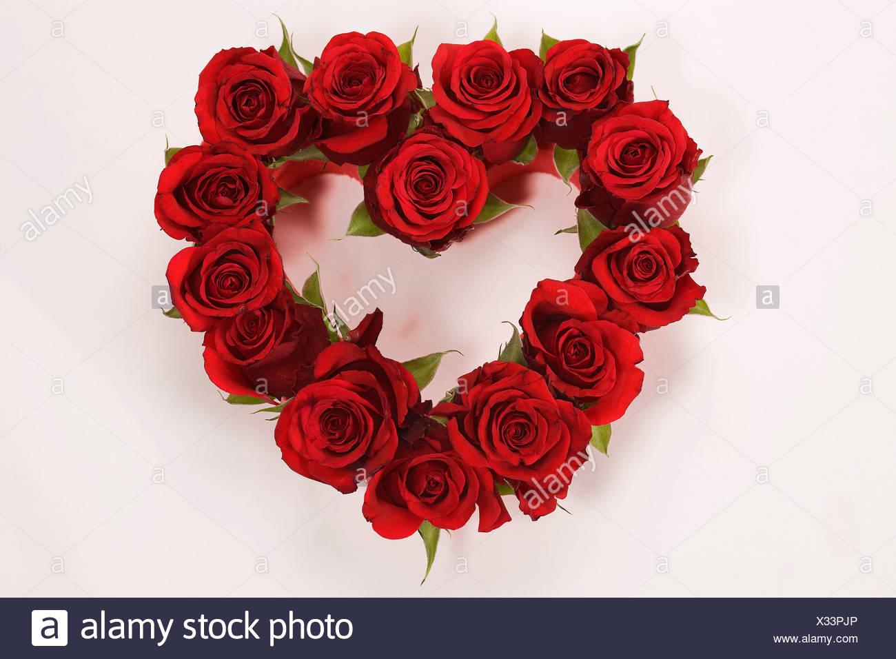 Genre Flower Flowers Gift Heart In Love Love Loving Red Rose Rose