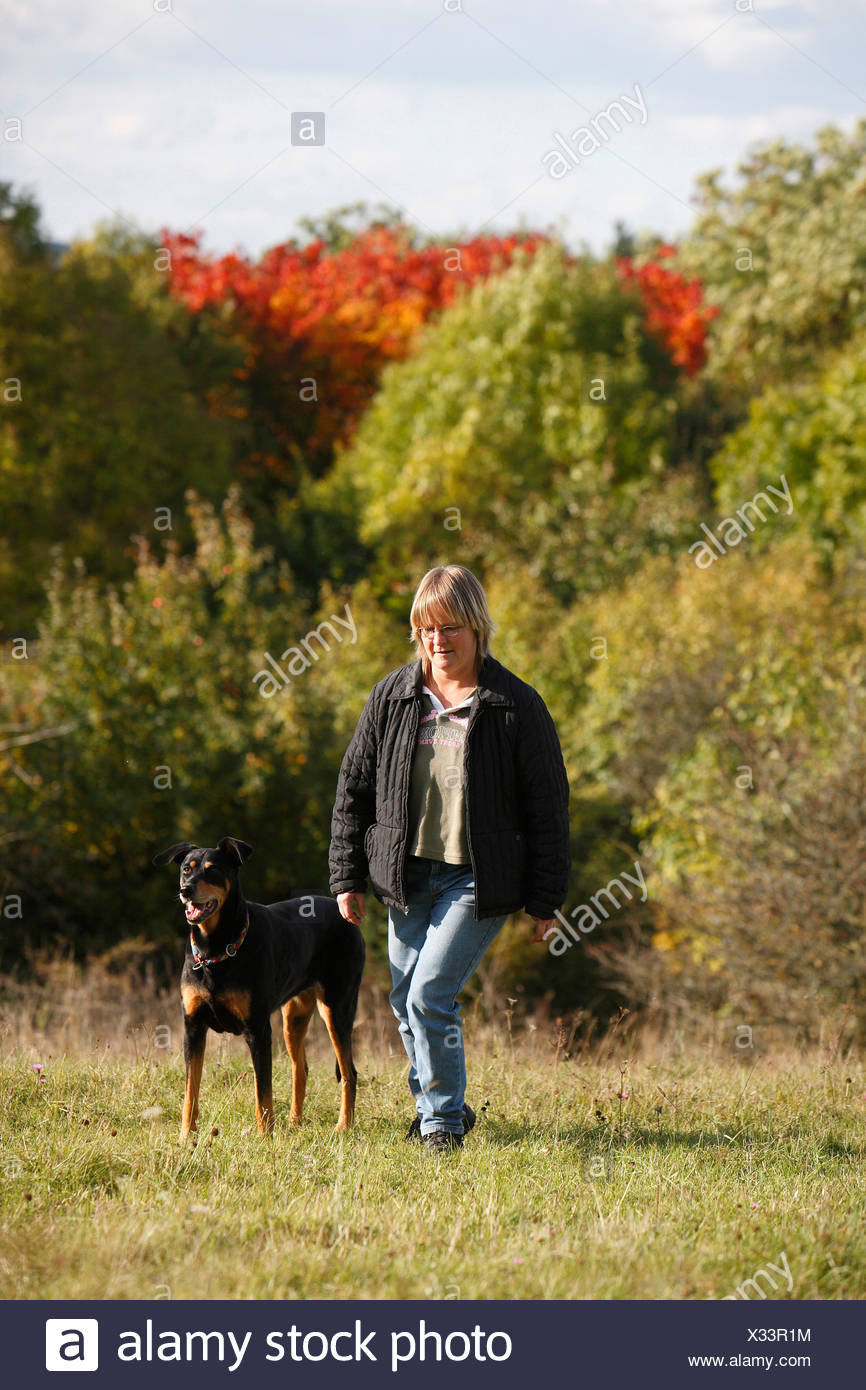 mixed breed dog (Canis lupus f. familiaris), woman walking over a meadow with a ten years old female Dobermann-mixed breed dog, - Stock Image