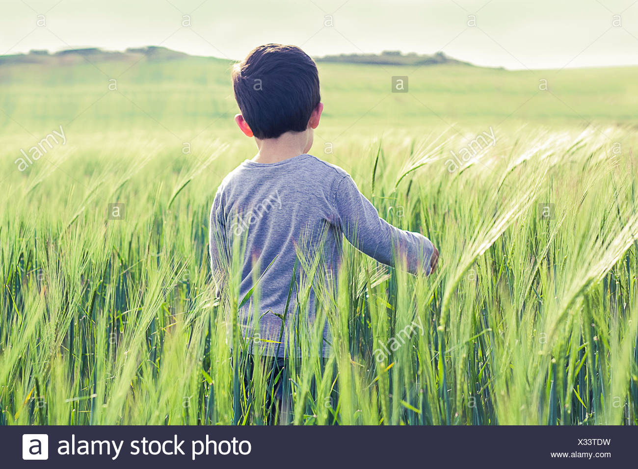 Boy (18-23 months) standing in field - Stock Image