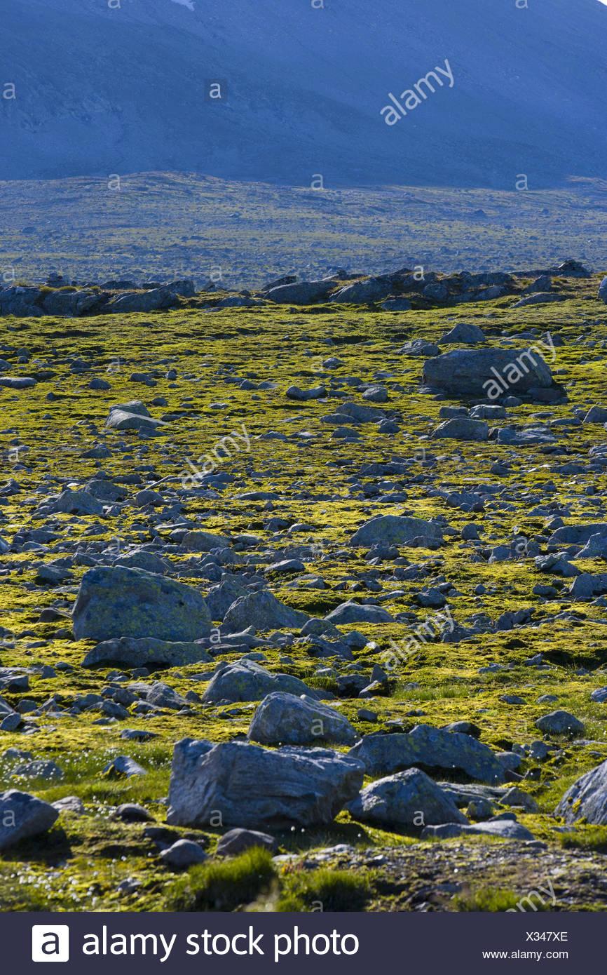 Valdresflya, Valdres, Oystre Slidre, Jotunheimen, Oppland, Norway, Scandinavia, - Stock Image
