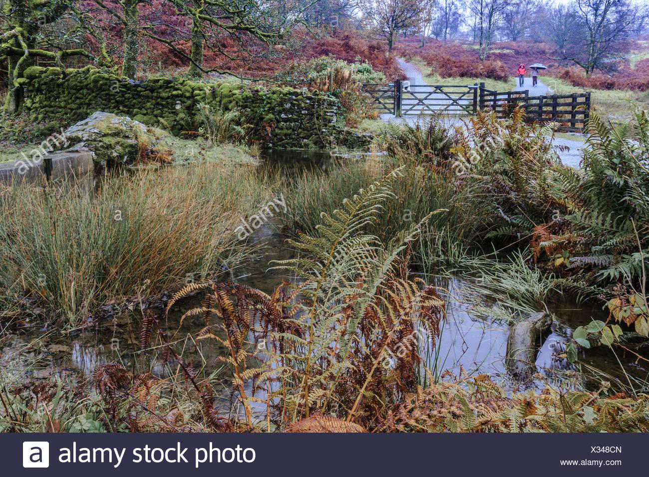 Tarn Howes  Cumbria UK - Stock Image