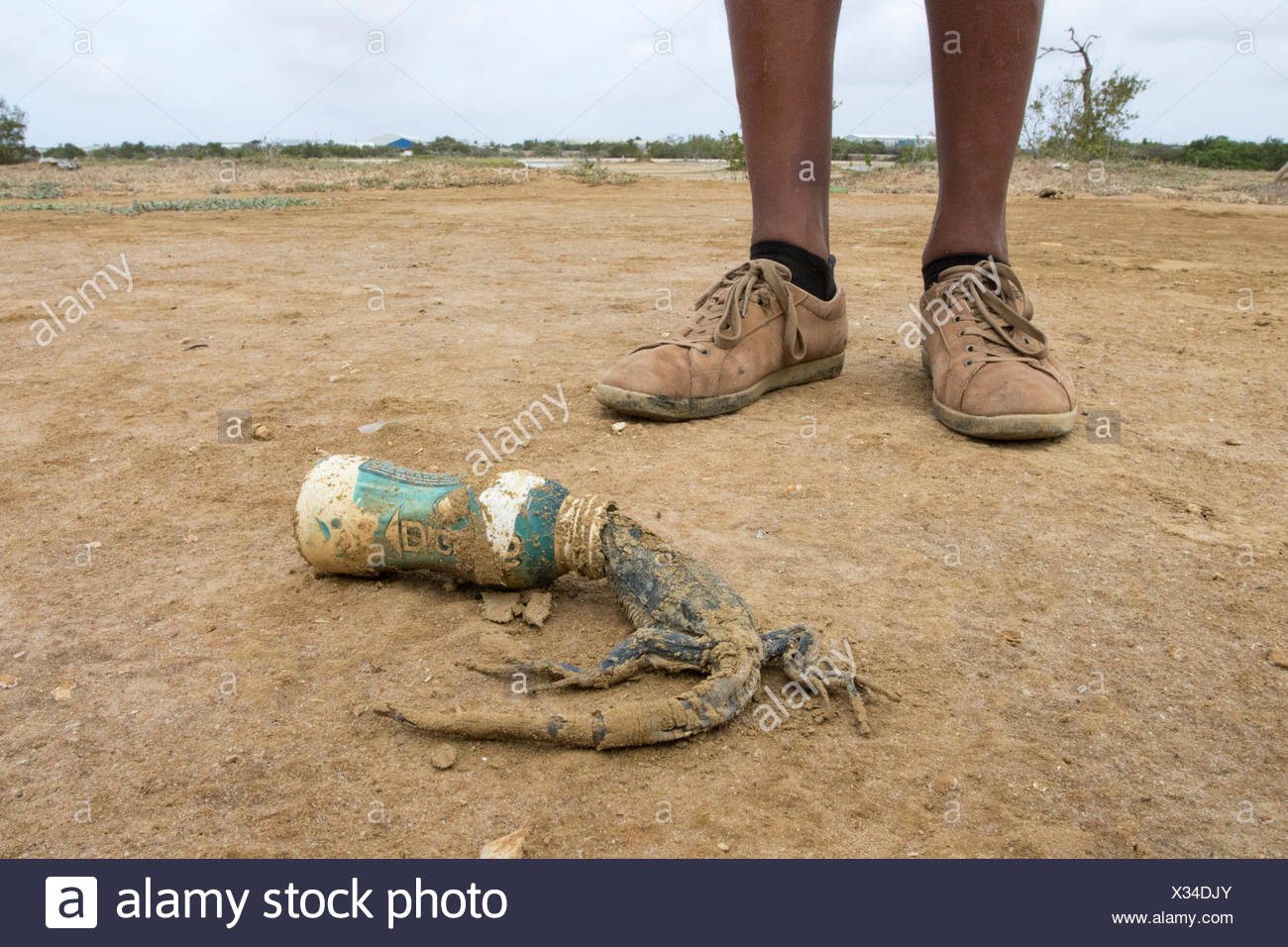 A lizard that has died after becoming stuck in a plastic bottle left as trash. - Stock Image