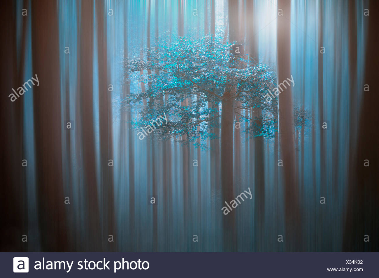 Moonlite Stock Photos Amp Moonlite Stock Images Alamy