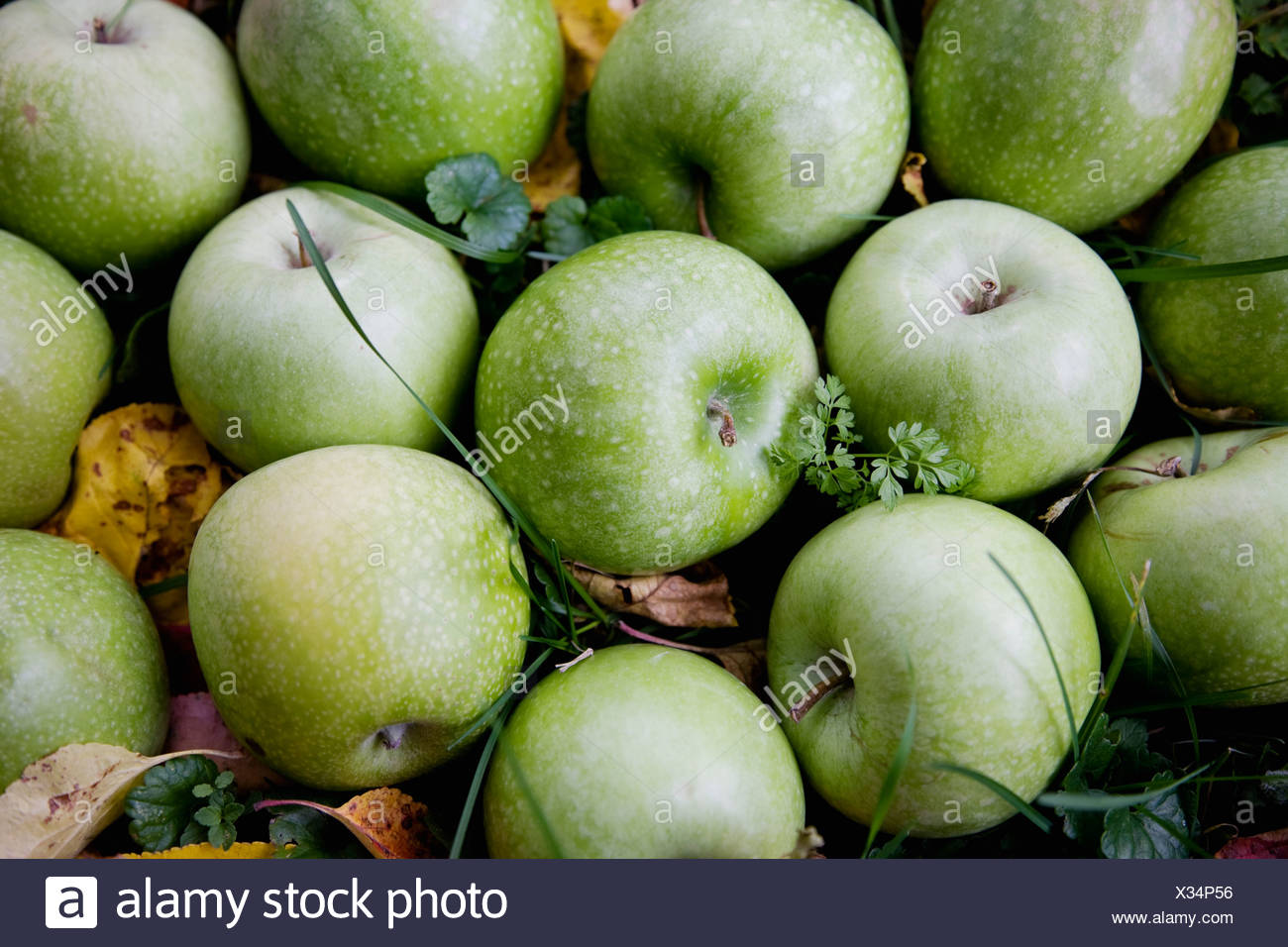 Green apples and leafs - Stock Image