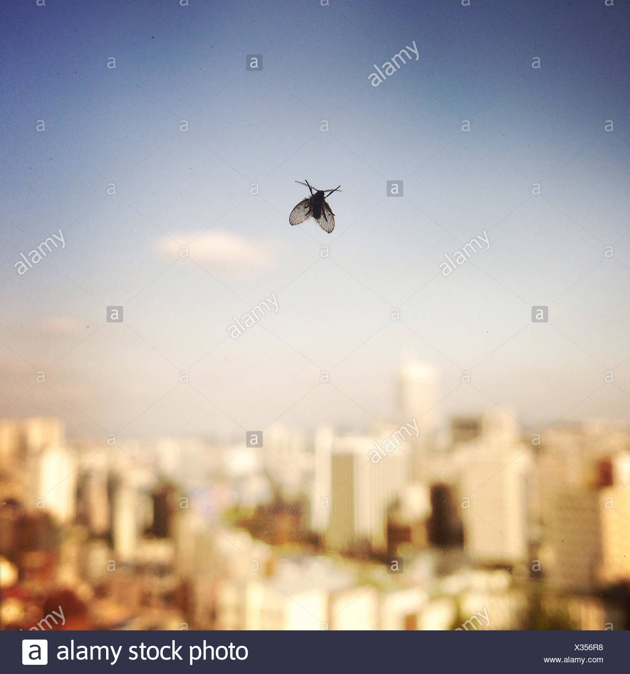A fly on a hotel window in central Seoul. - Stock Image