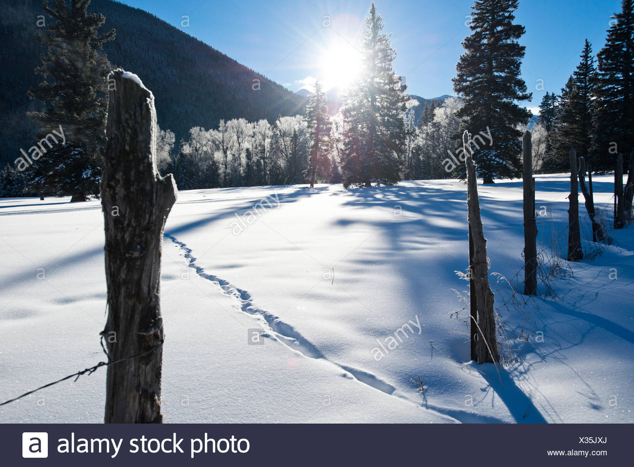 Morning sun shines on a snow covered field. - Stock Image