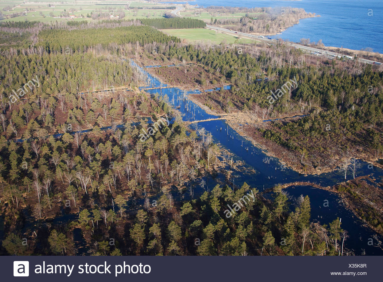renaturation of a highmoor affected by peat-cutting, Germany, Bavaria, Chiemsee - Stock Image
