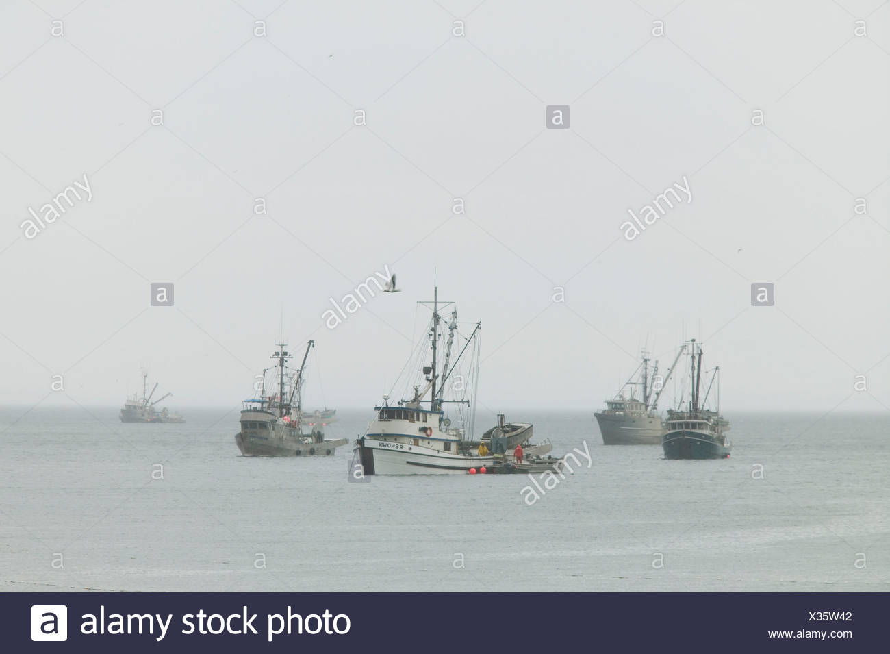 Herring fleet off of Phipp's Point, Hornby Island, British Columbia, Canada - Stock Image
