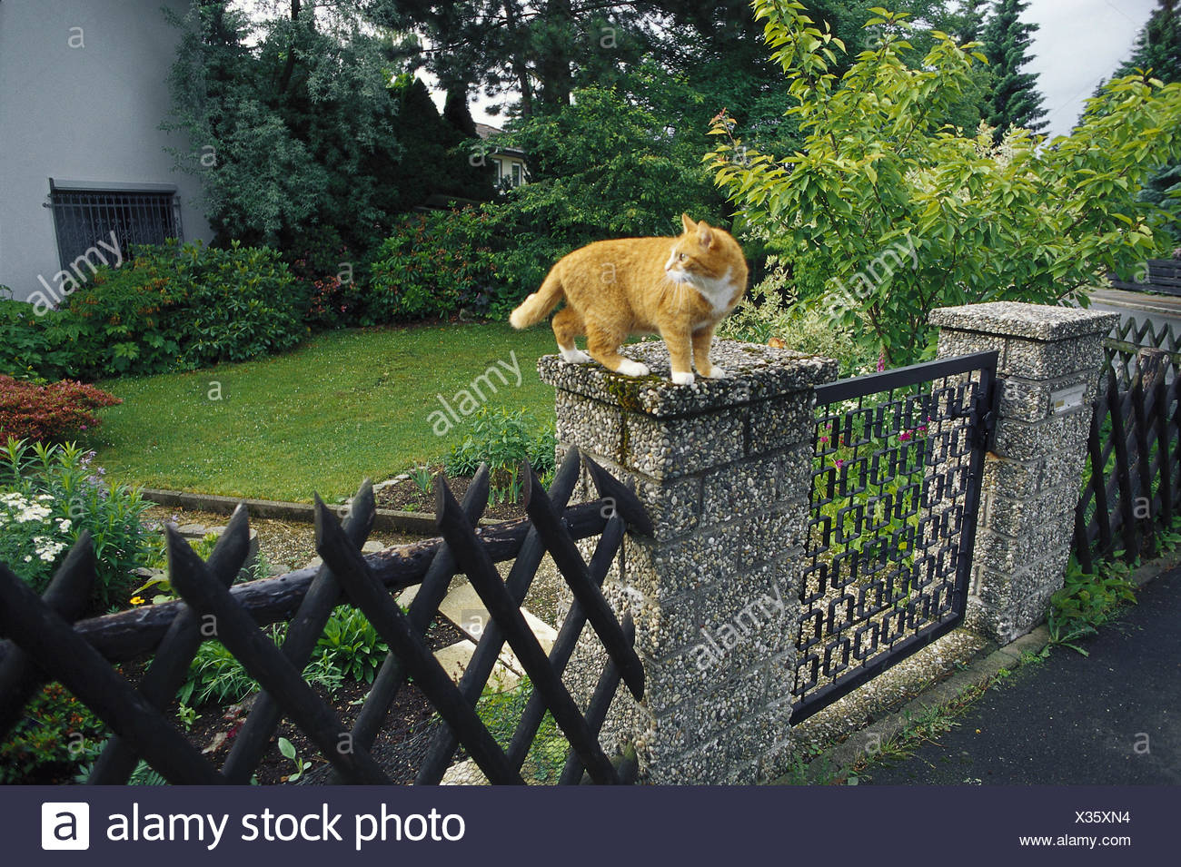 Garden fence, gatepost, cat, sit, look around side view, fence, garden, property, goal, garden goal, post, pillar, house cat, animal, pet, red-striped, attention, whole body, outside, - Stock Image