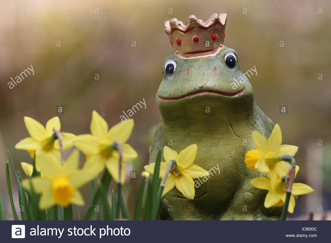 Garden figure, 'frog prince', daffodils, detail, flowers, garden, frog, figure, ceramics figure, crown, decoration, garden decoration, nicely, in of a kitschy way, spring, - Stock Image