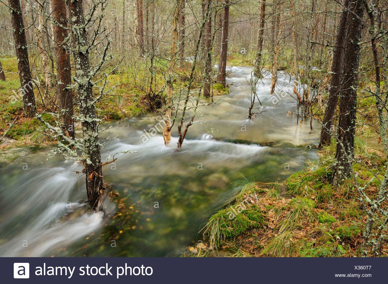 Floodwater in the forest near Straumbu, Rondane National Park, Norway, Scandinavia, Europe Stock Photo