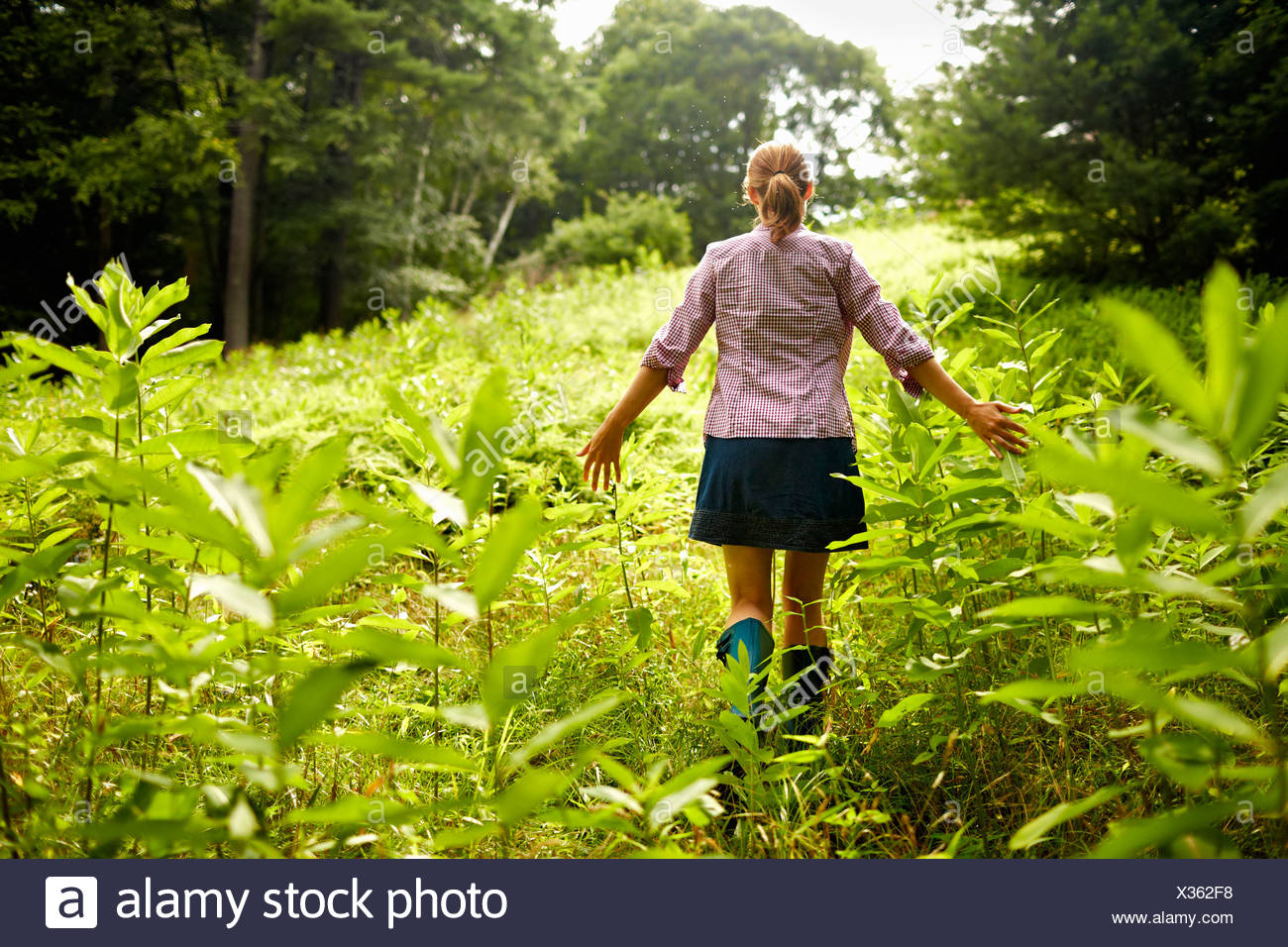 A woman walking through the undergrowth in woodland, with her arms brushing the tops of the wild plants. - Stock Image