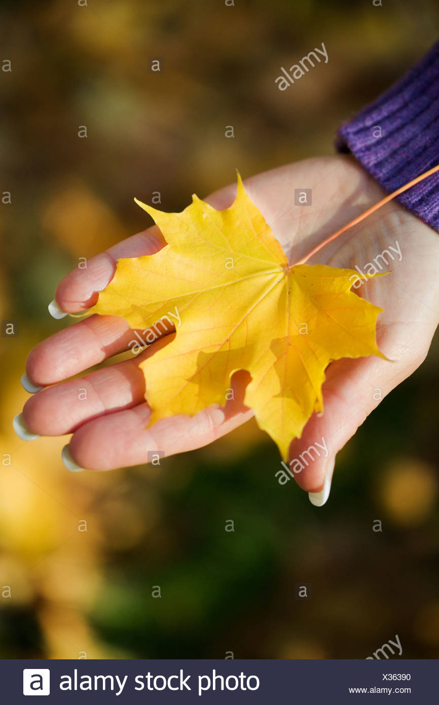 A woman holding an autumn leaf Sweden. - Stock Image