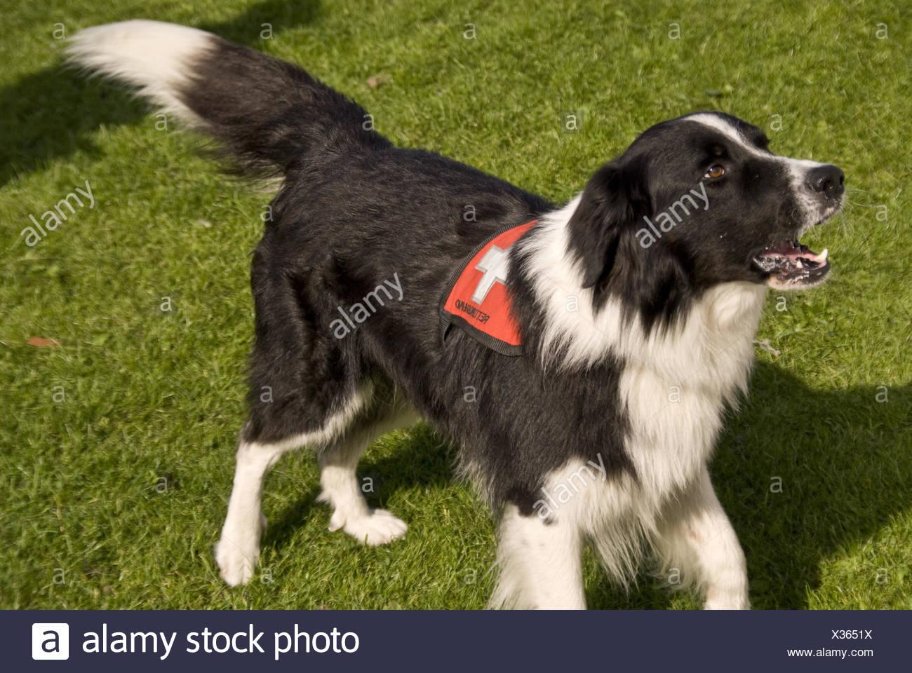 Rescue Dogs Squadron Stock Photo