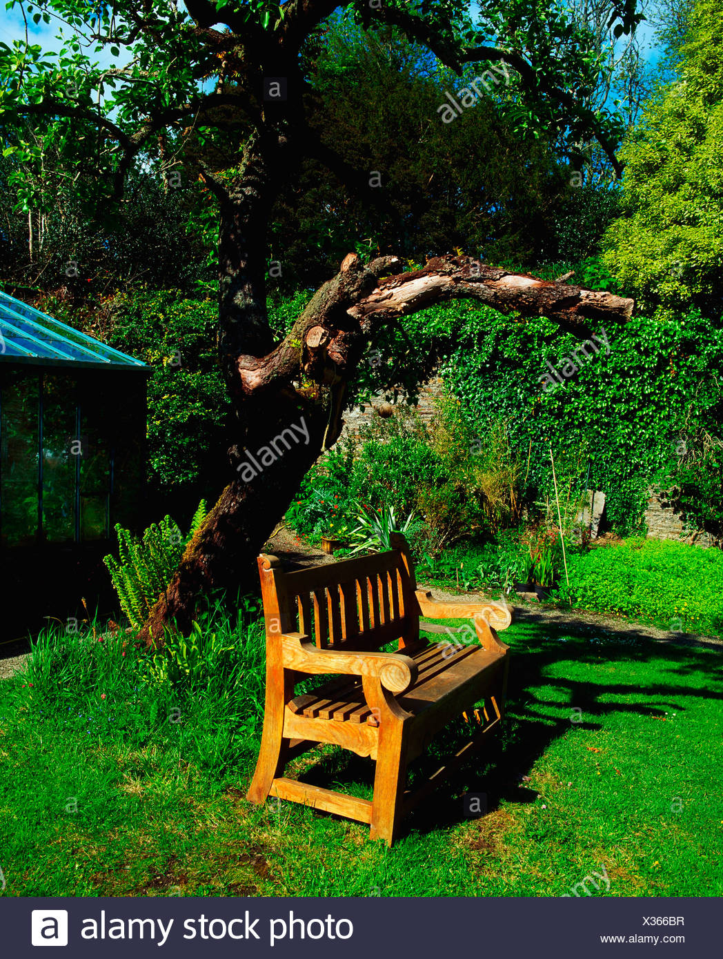 Creagh Baltimore Co Cork, Garden Bench under old Tree, The Walled Garden Late Summer - Stock Image