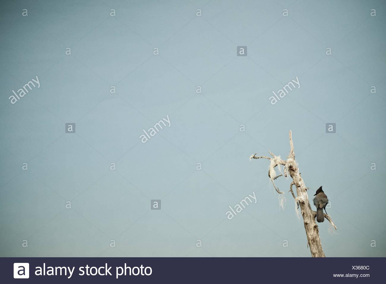 Bird on tree branch - Stock Image